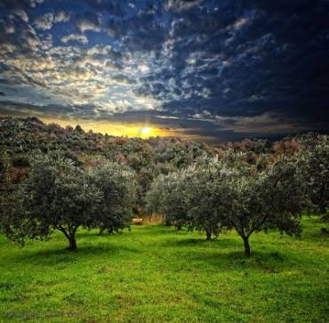 Origen del aceite de oliva.
