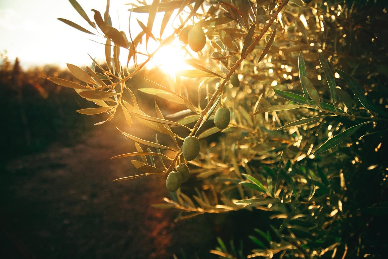 Los 5 remedios definitivos del aceite de oliva virgen extra (¡te sorprenderán!)